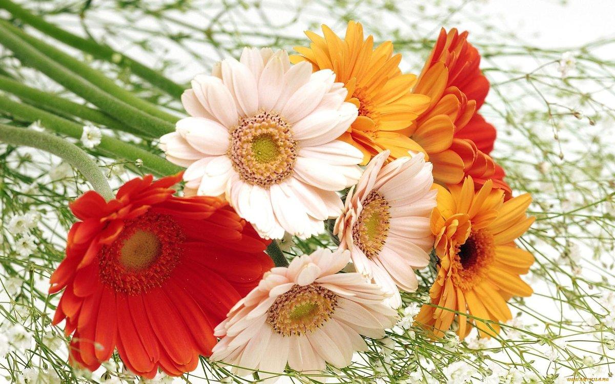 Beautiful Flowers Wallpaper Free Download Al172fq Alhuda Wal Card