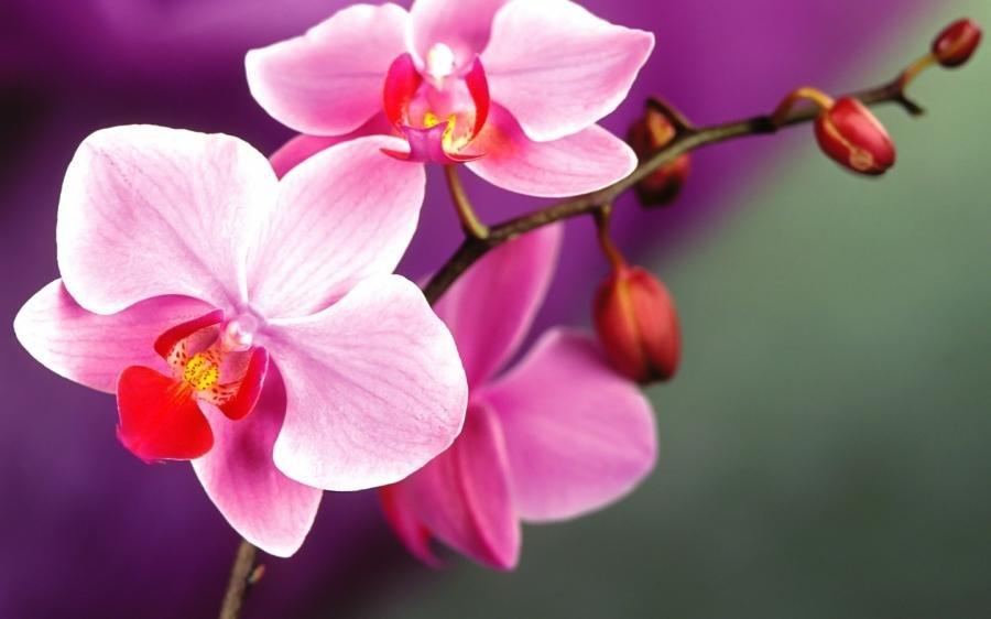 Картинки орхидей на рабочий стол красивые большие на весь экран, поздравления днем