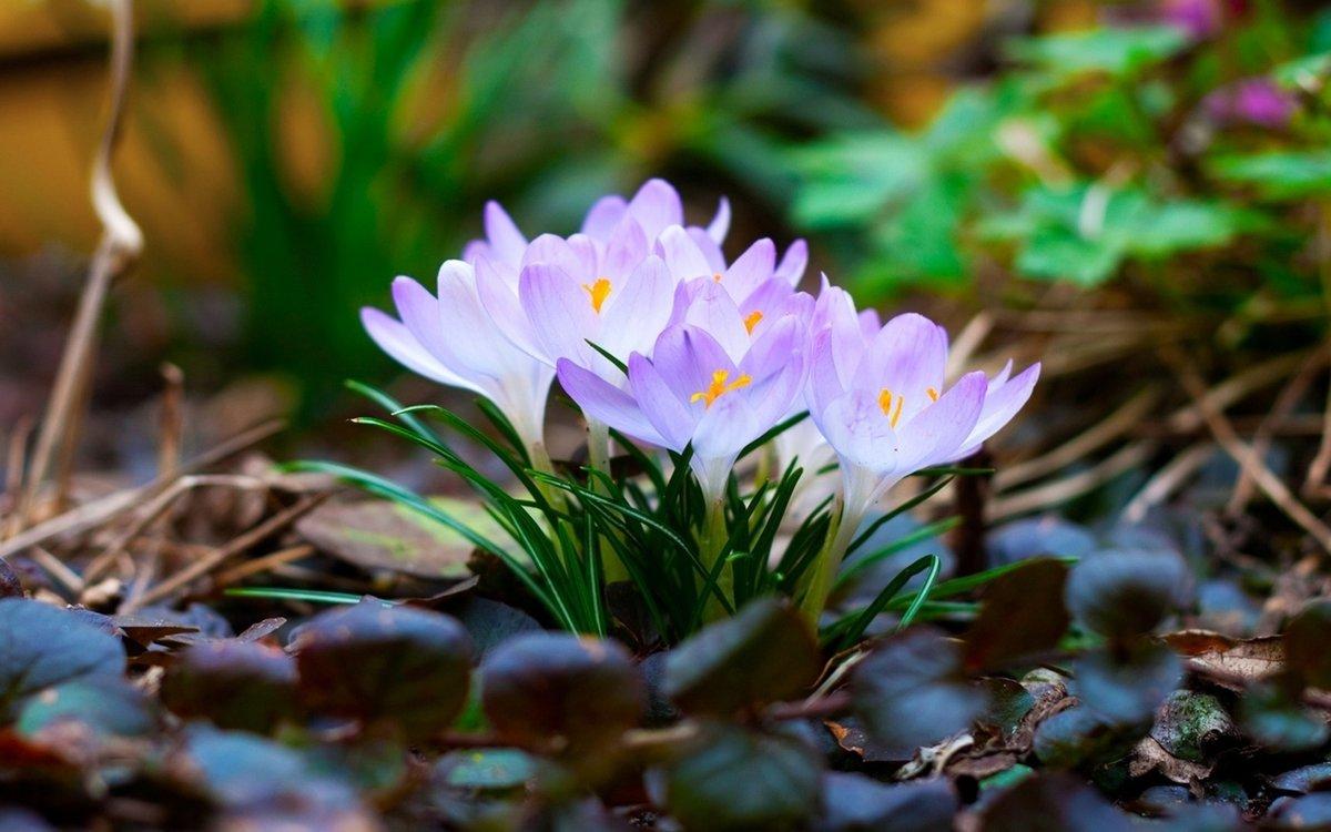 Картинки для рабочего стола весна на весь экран природа