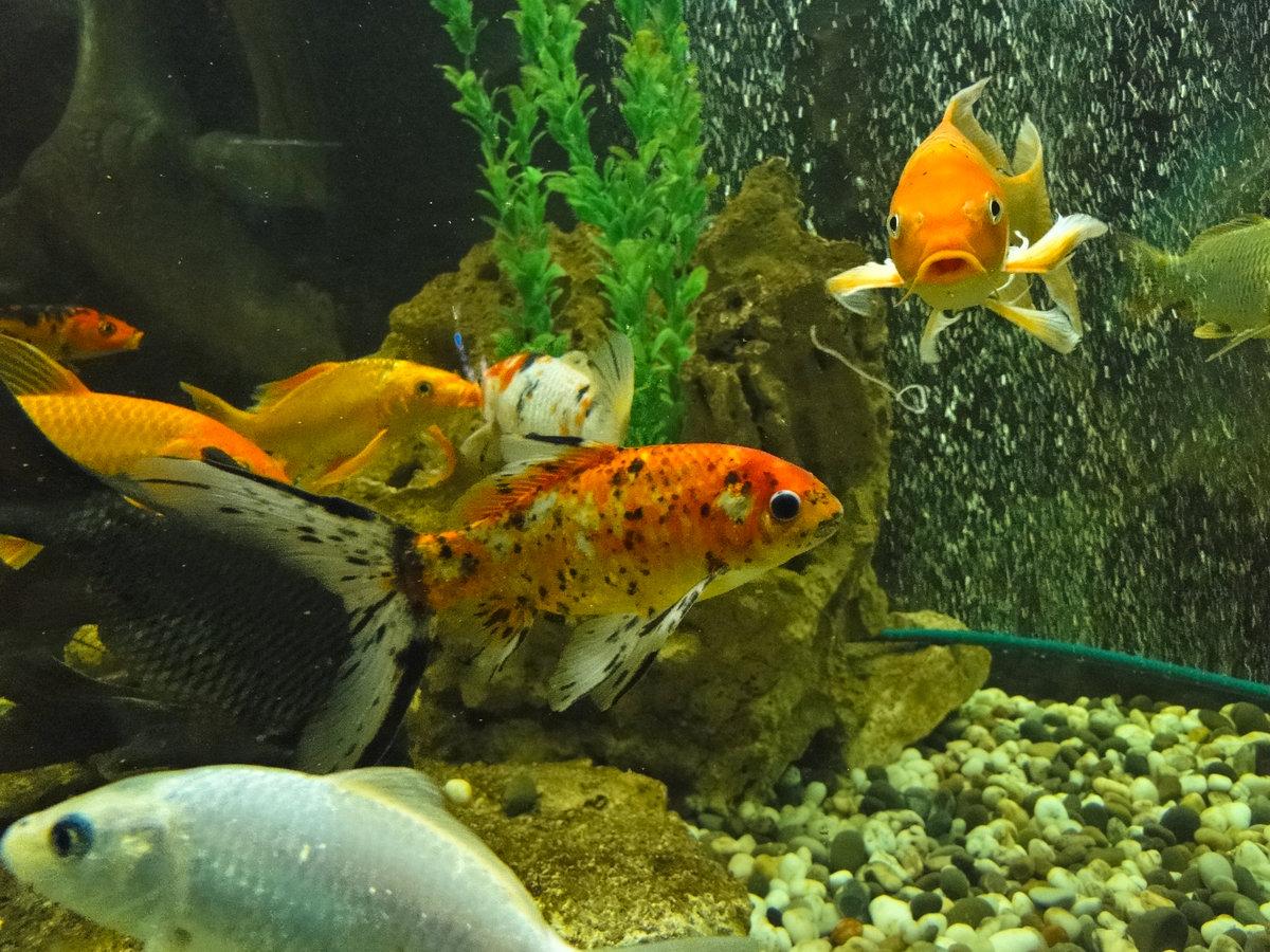 выбором картинки с рыбами аквариумные надгробные купить
