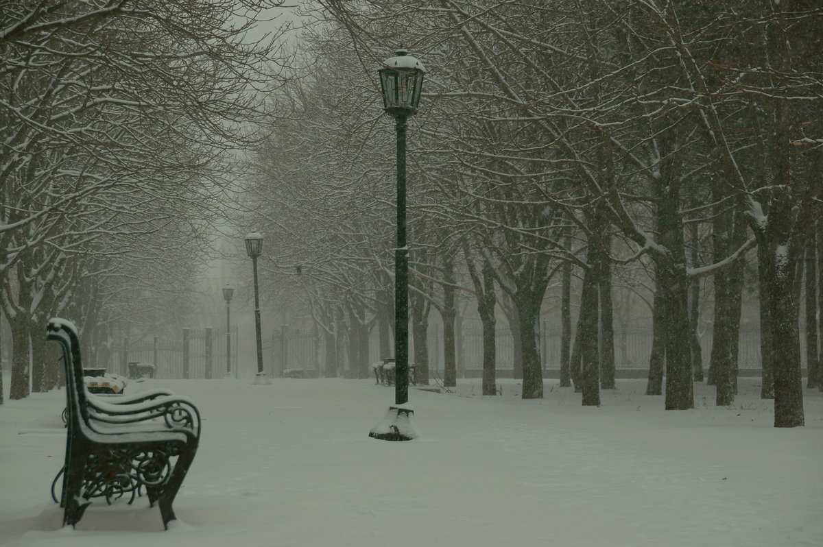 Вставкой для, зимний парк гифка