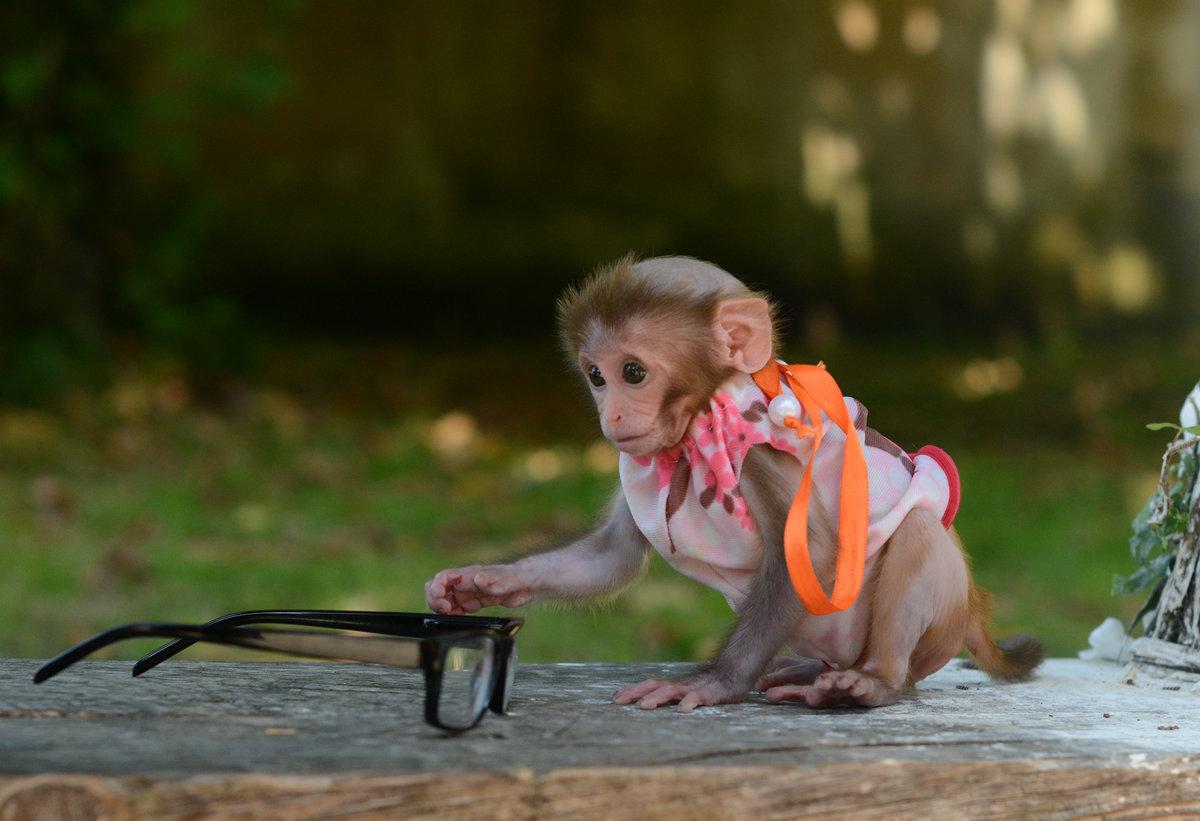 Прикольные картинки обезьянки с надписью отдавали себе