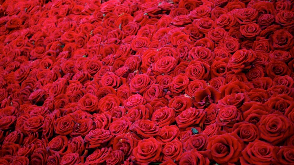 Открытки с днем рождения миллион роз