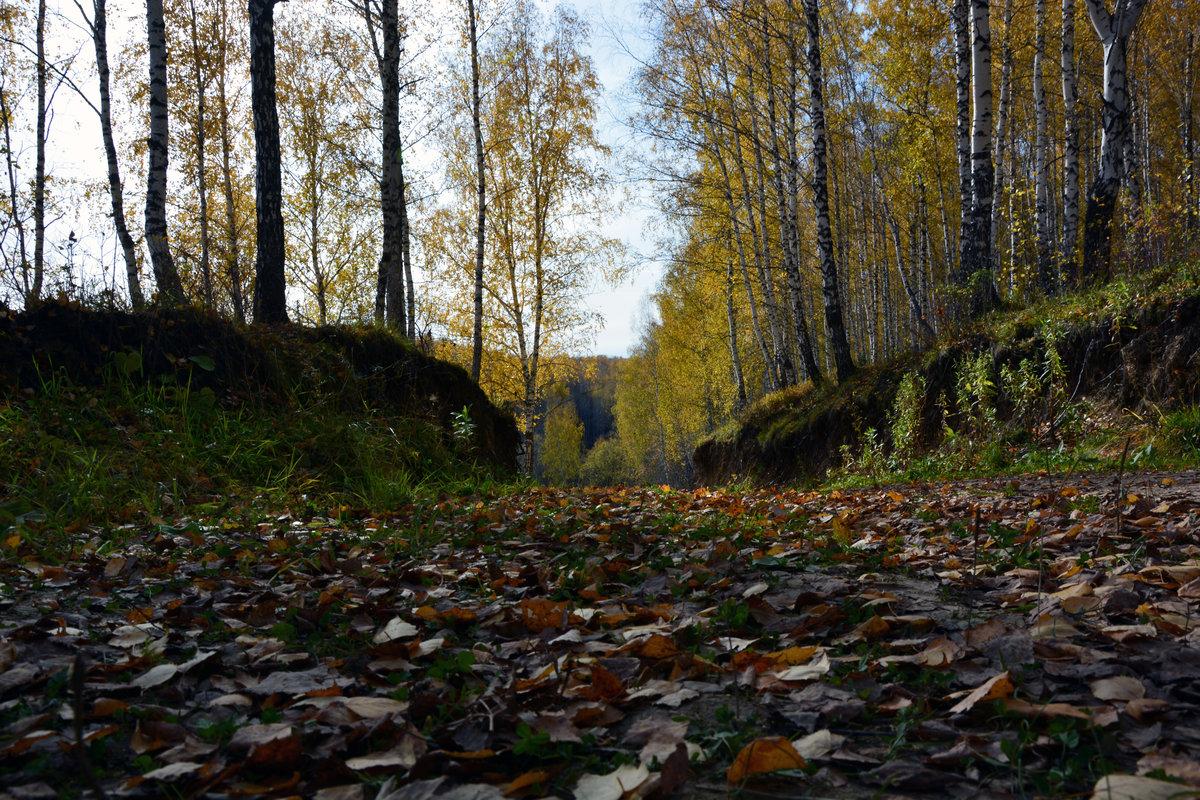 тобольск осень фото выращивания домашних условиях