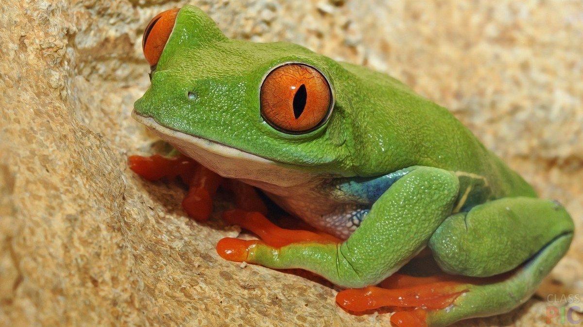 Святой, картинки фото лягушки
