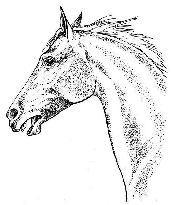 Картинки с ручкой конь