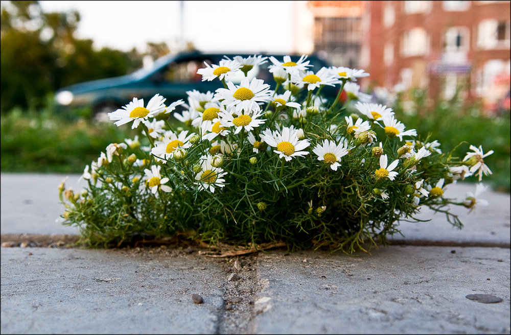 Картинка цветочная круглая
