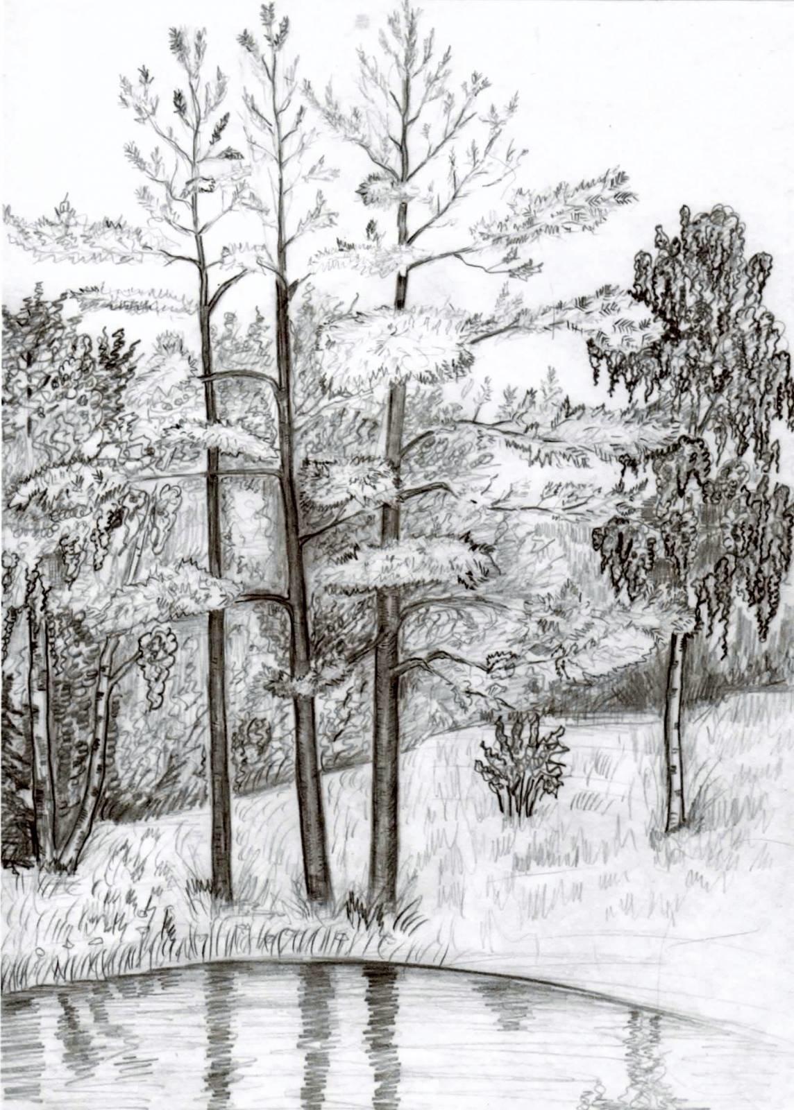 Картинки простым карандашом лес
