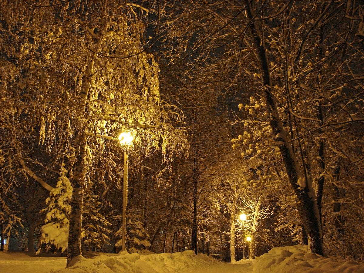 Картинка зима деревья в снегу фонарь