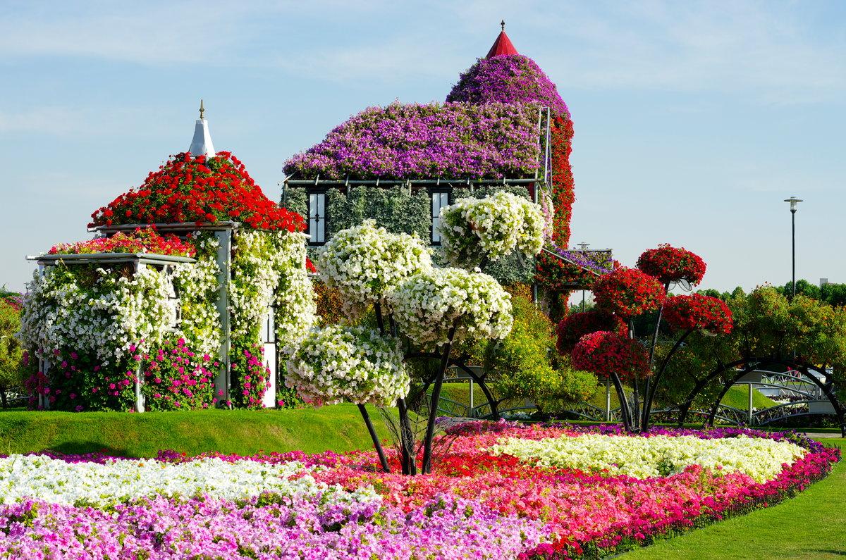 Цветы, цветы мира официальный сайт