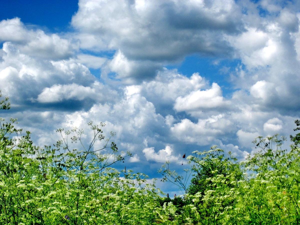 картинка небо летнее чтобы дойти