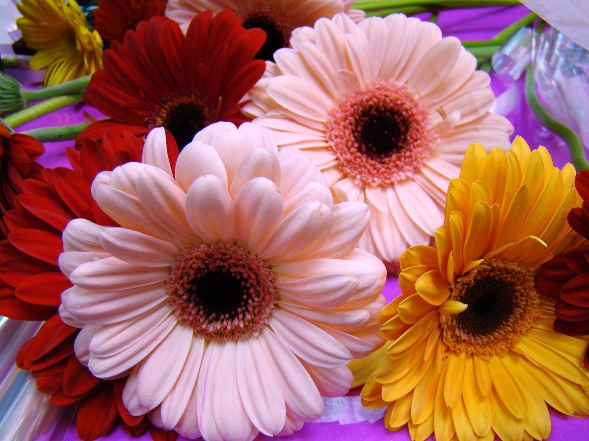 Фото открытки, с днем рождения открытки цветы герберы