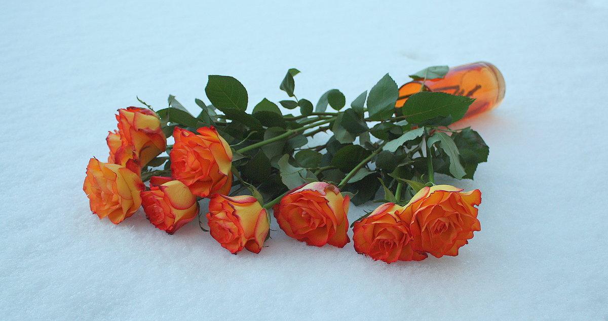 Картинки оранжевые розы зимой