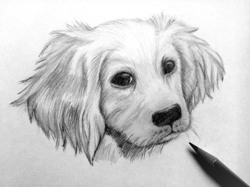 Картинки карандашом собака карандашом поэтапно