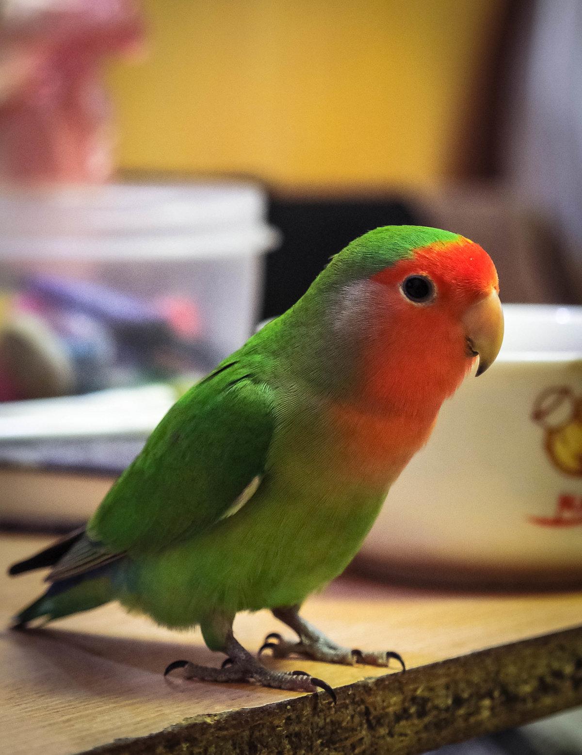виды попугаев картинки такие техники, благодаря