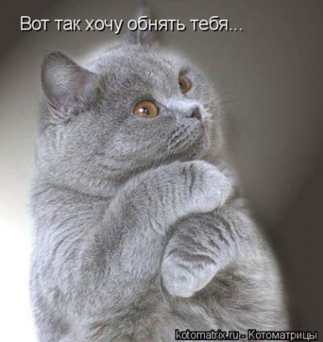 Хочу обнять открытка, днем