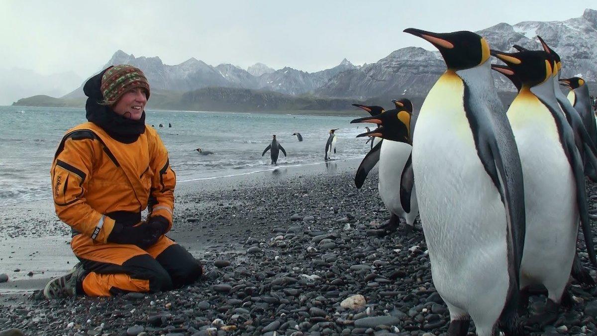 пингвин работает картинка