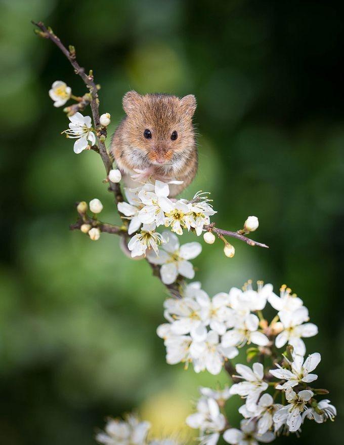 Про доверие, картинки мышек красивые