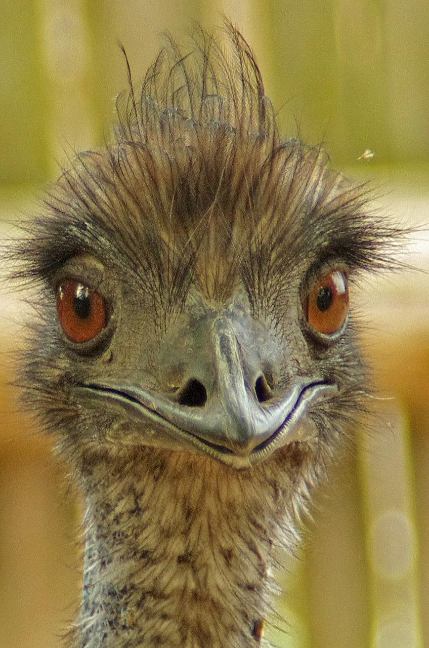 Наступившим, картинки смешной страус