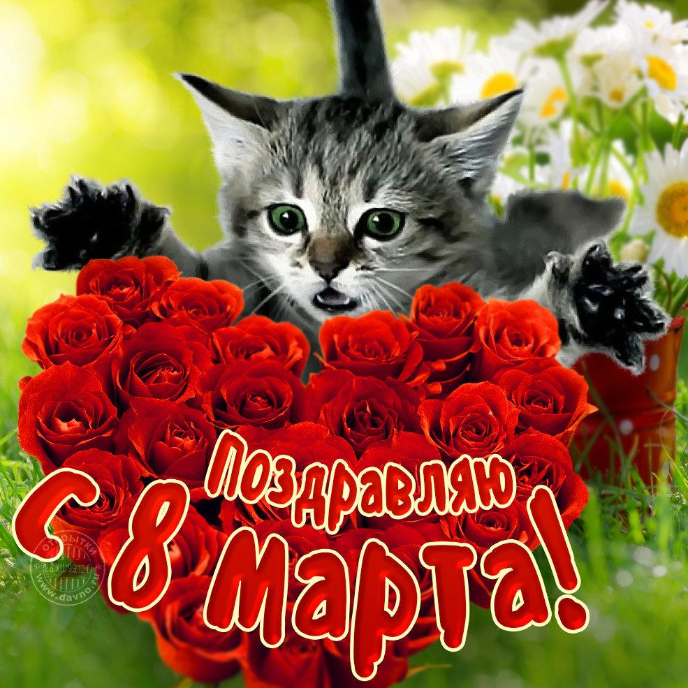 С 8 марта открытка с кошкой