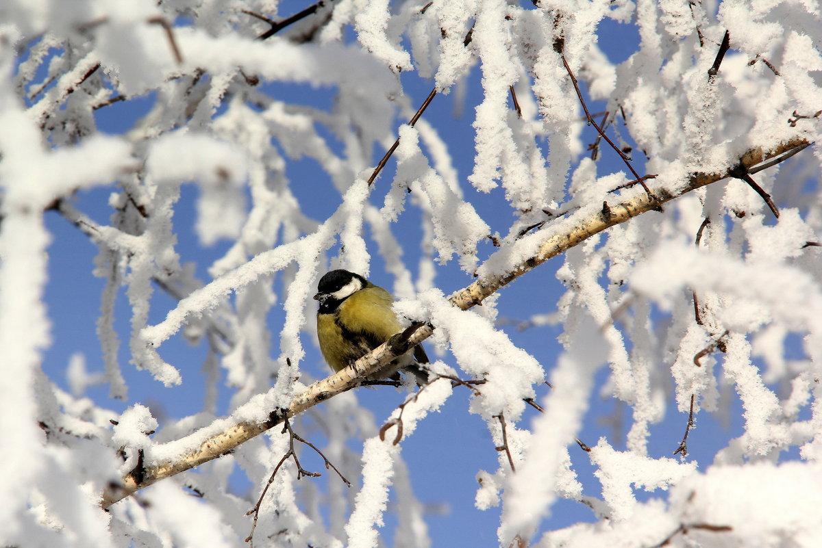 предков птицы зимой на деревьях оказываю помощь гражданам