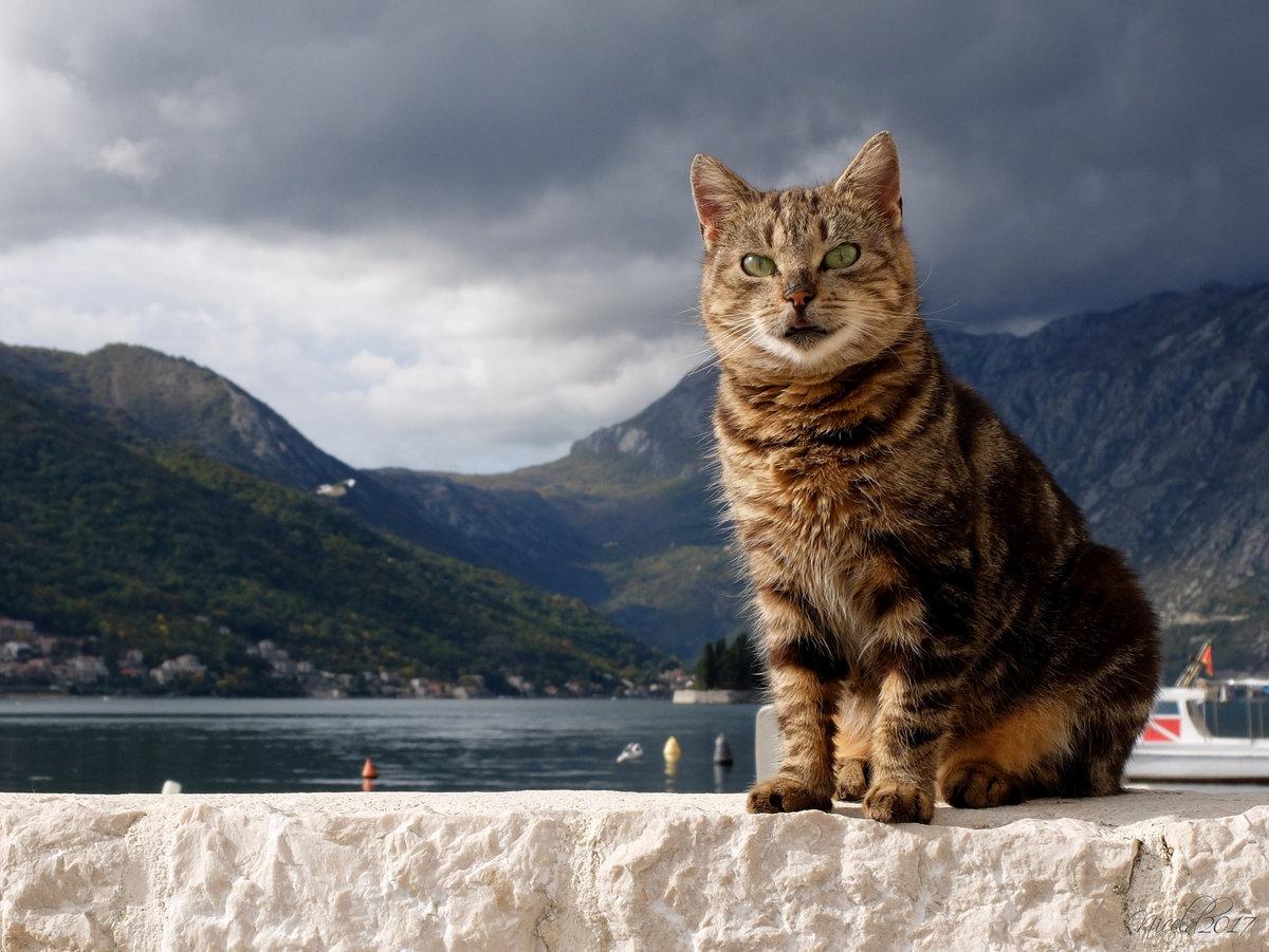 еще картинки с котами в горах окна