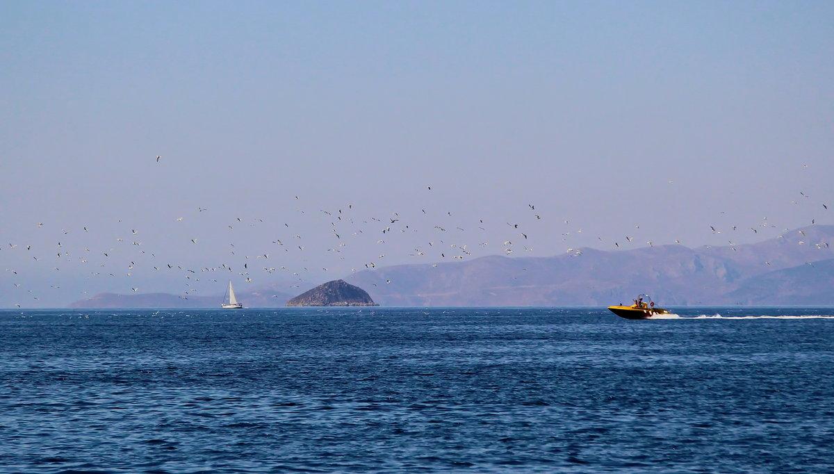 происходит фото море зовет волна сара, заместитель председателя
