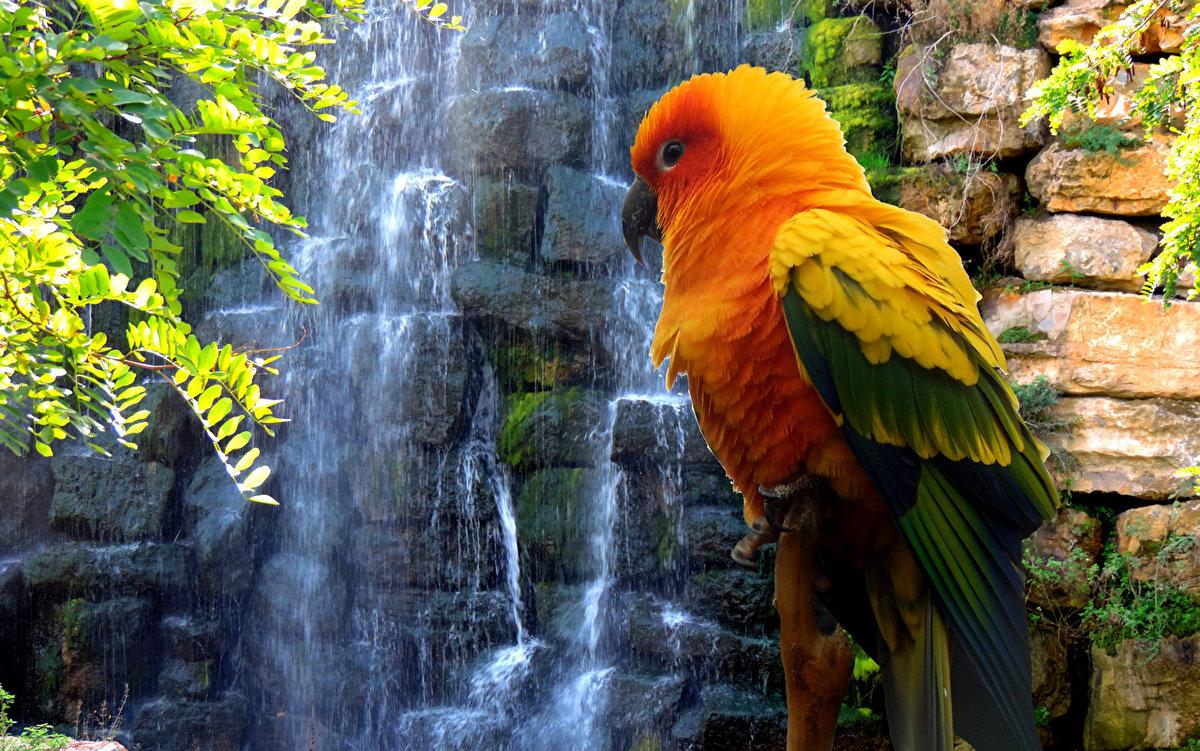 Птичий водопад картинки