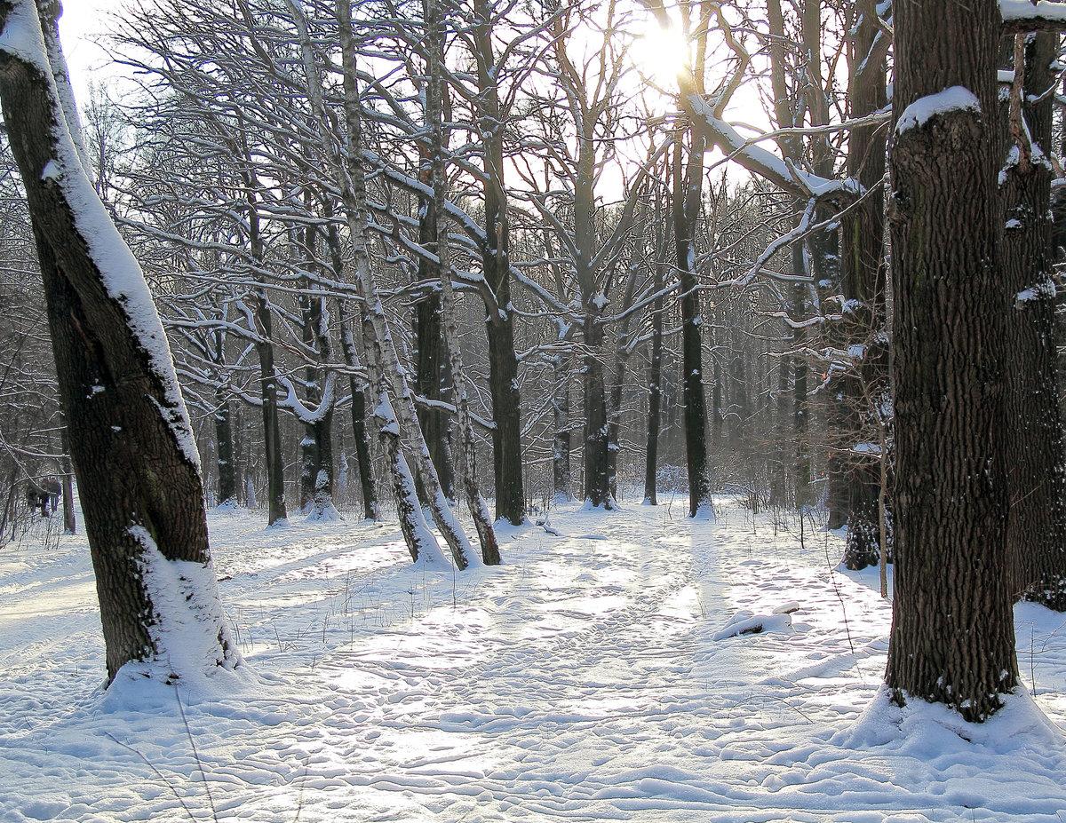 раз поляна в лесу зимой картинки снова помощь