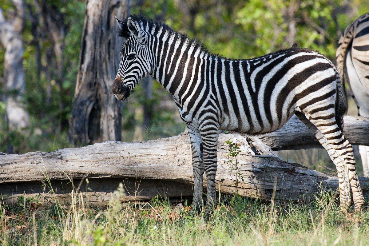 Картинки фото животных дикие