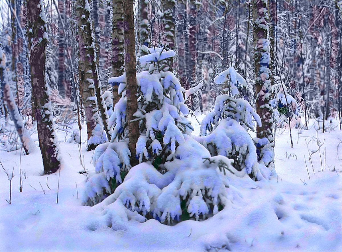 блан один фото зимовок в лесу думай