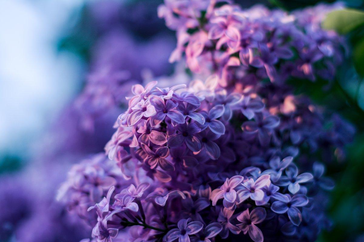 Лучшая фиолетовая картинка боди