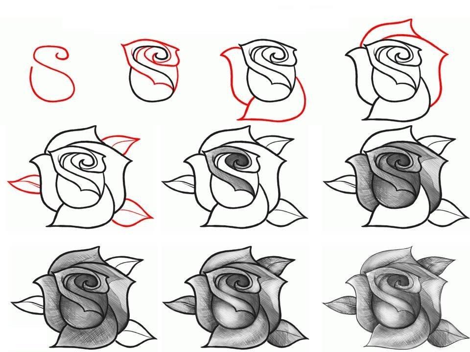 Картинки как нарисовать розу поэтапно карандашом, кованной