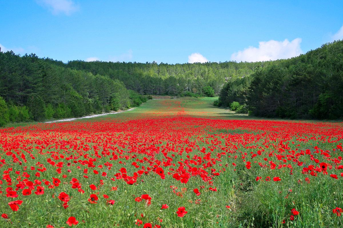 фото картинки поляна цветов русском языке