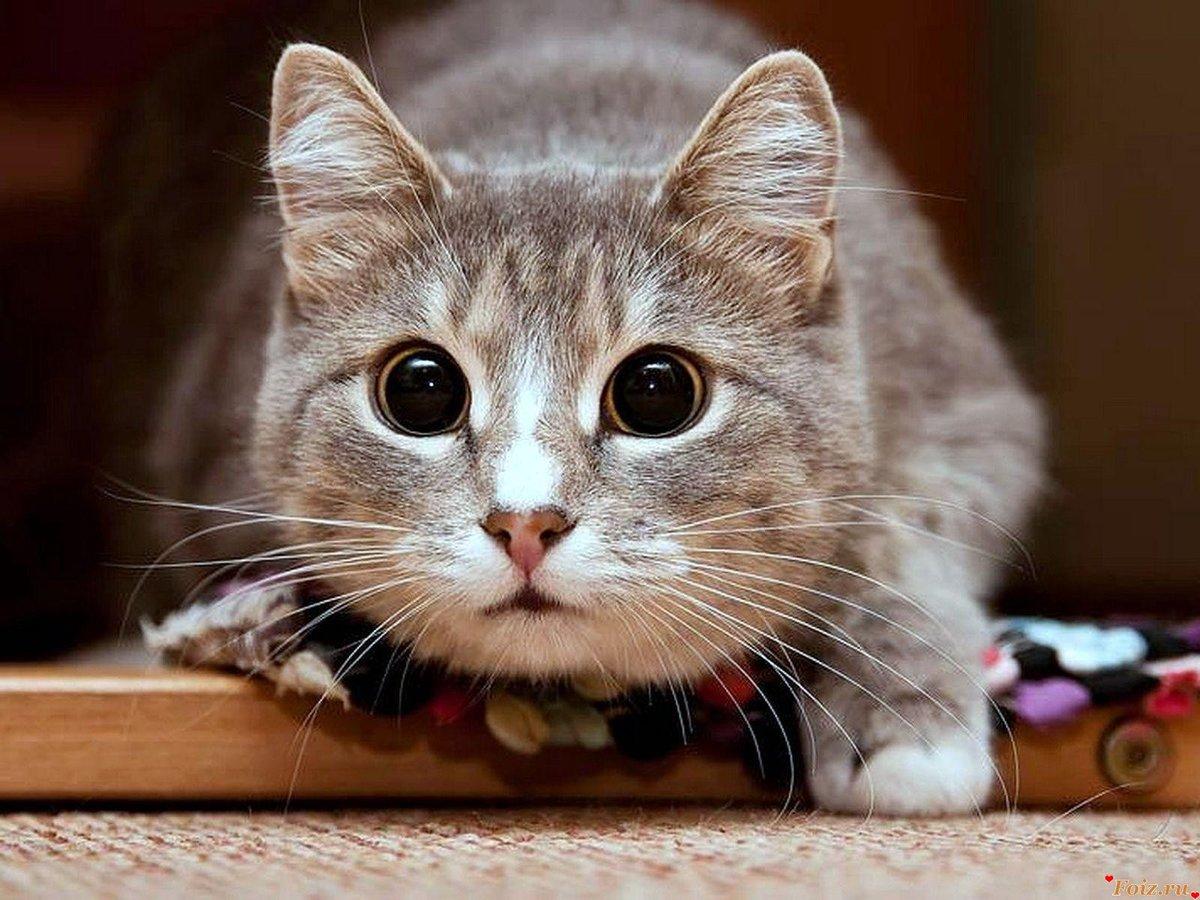 Прикольный кот в картинках