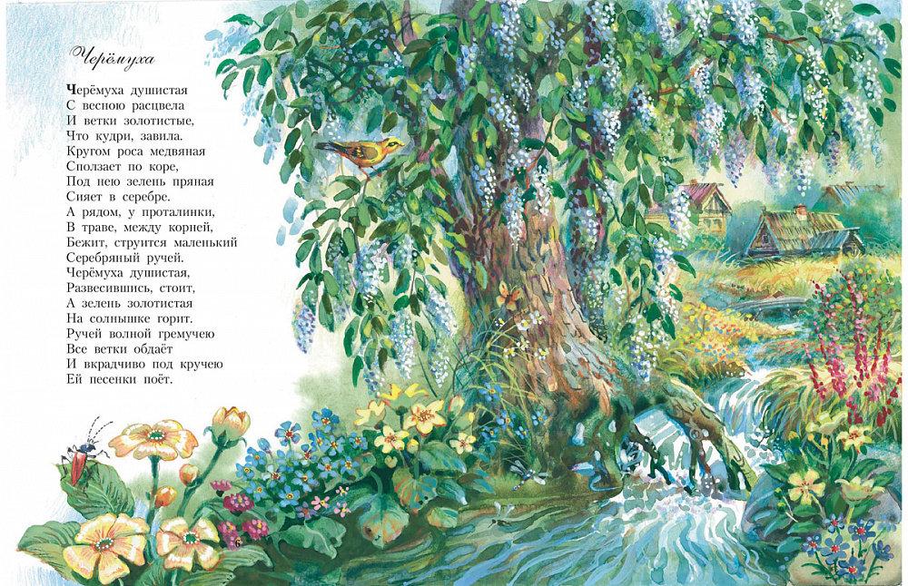 Рисунки черемухи к стихотворению