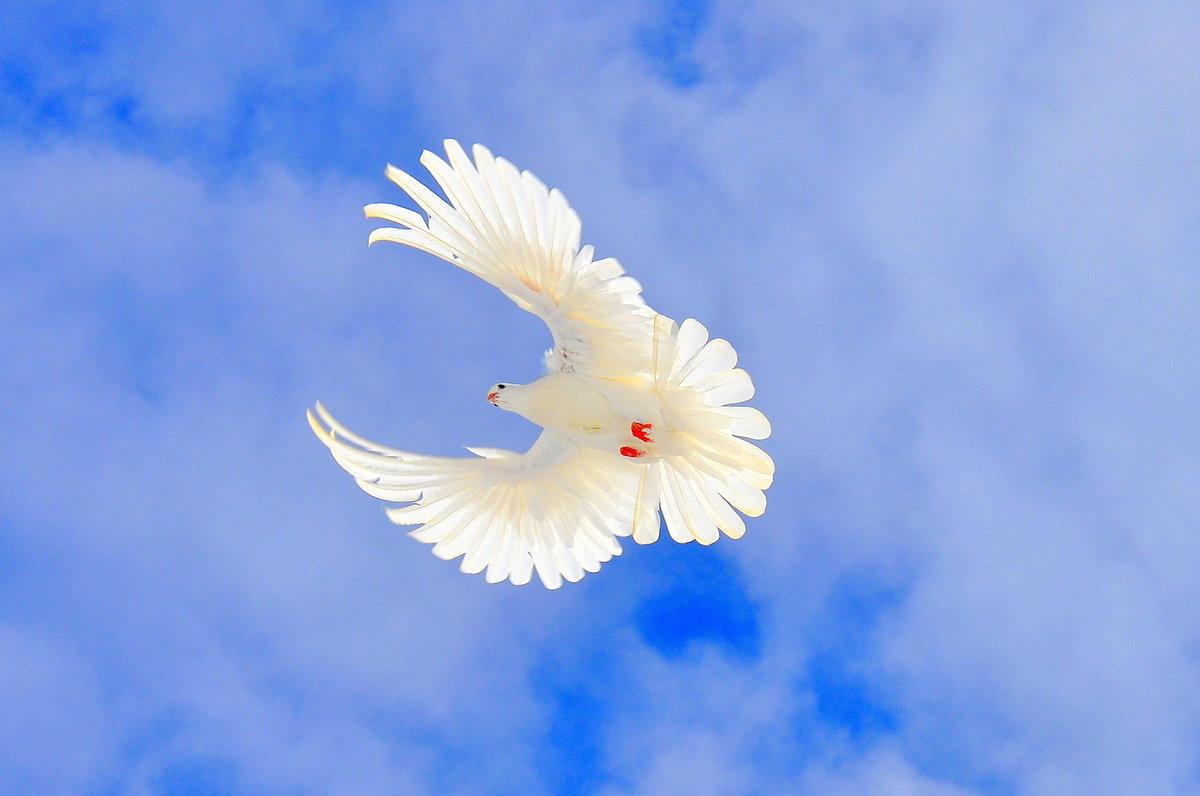 Днем, белые птицы открытки