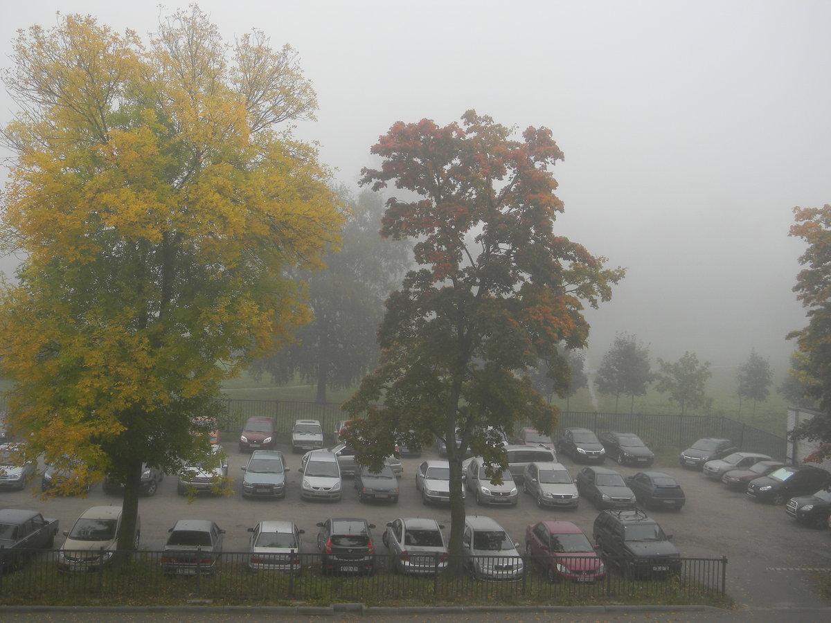 осенний туман#город #деревья #красота #осень #природа #туман