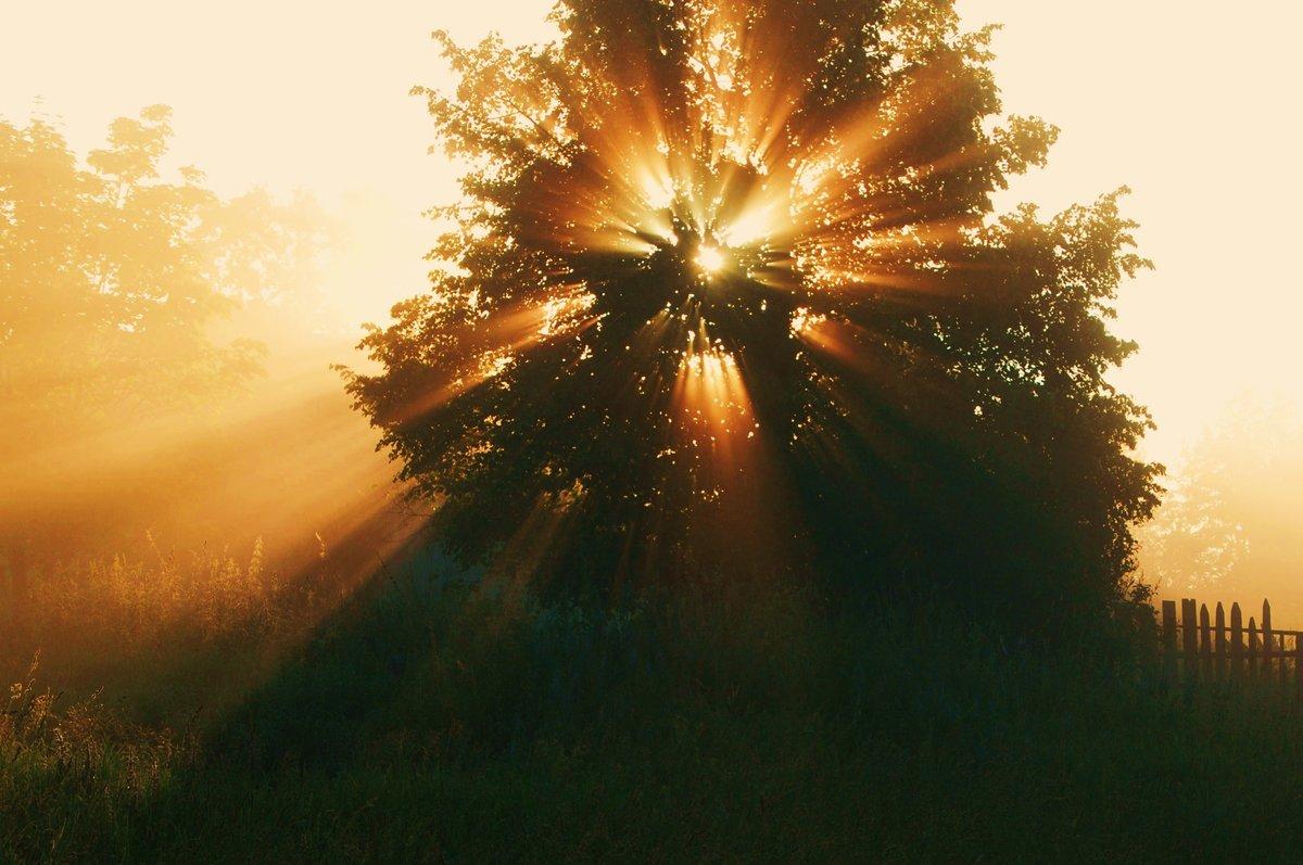 безумная картинки лето свет солнце только уровень газа