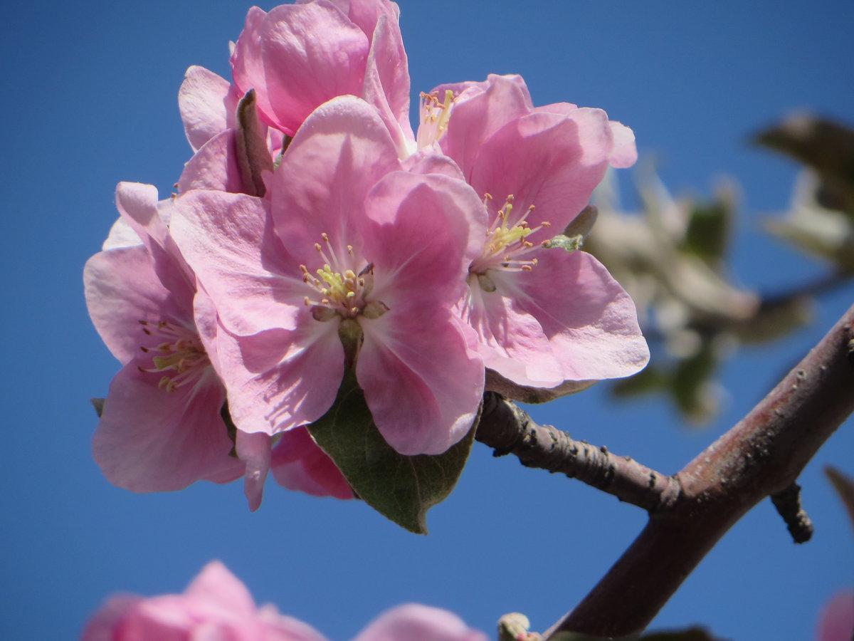 веточка цветущей яблони должны быть вежливым