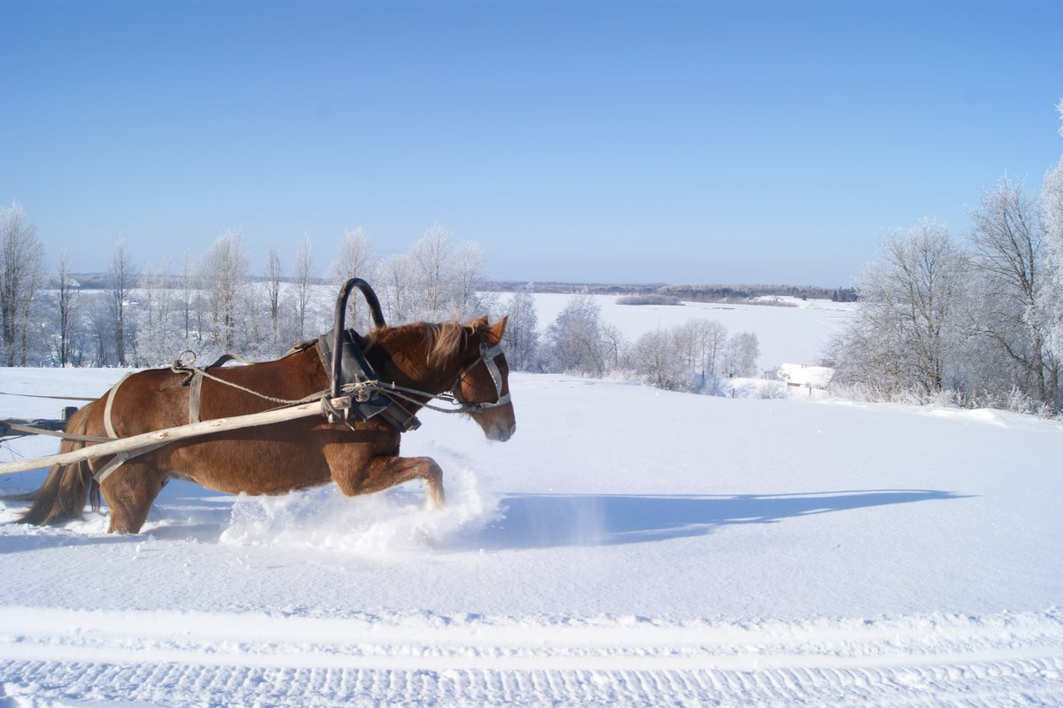 картинки сани с лошадьми