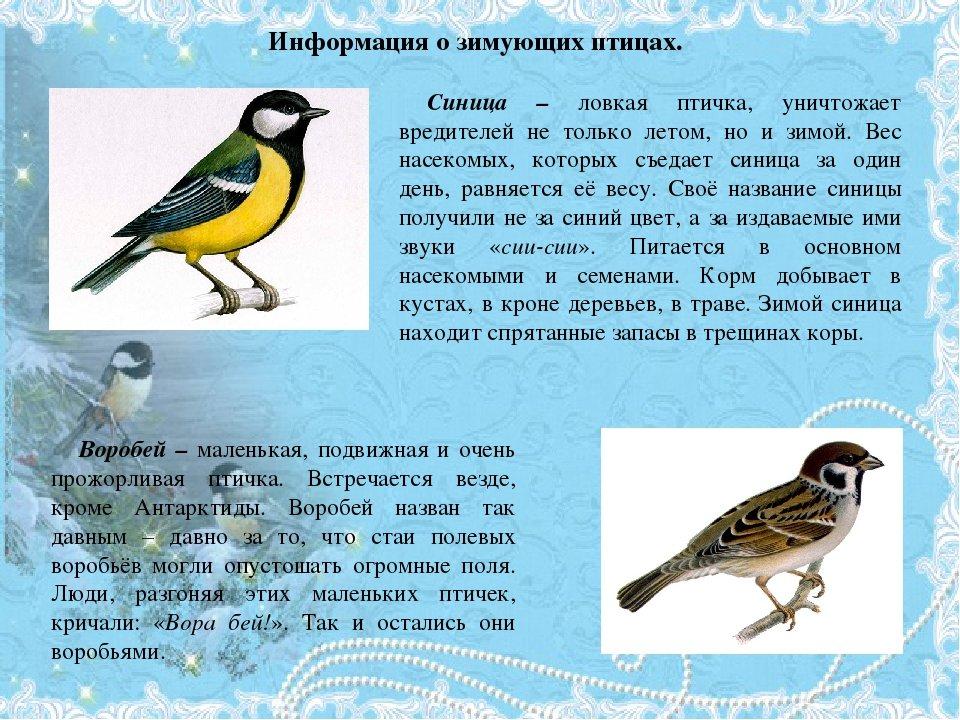 Картинка человек летит на птице фото ниже