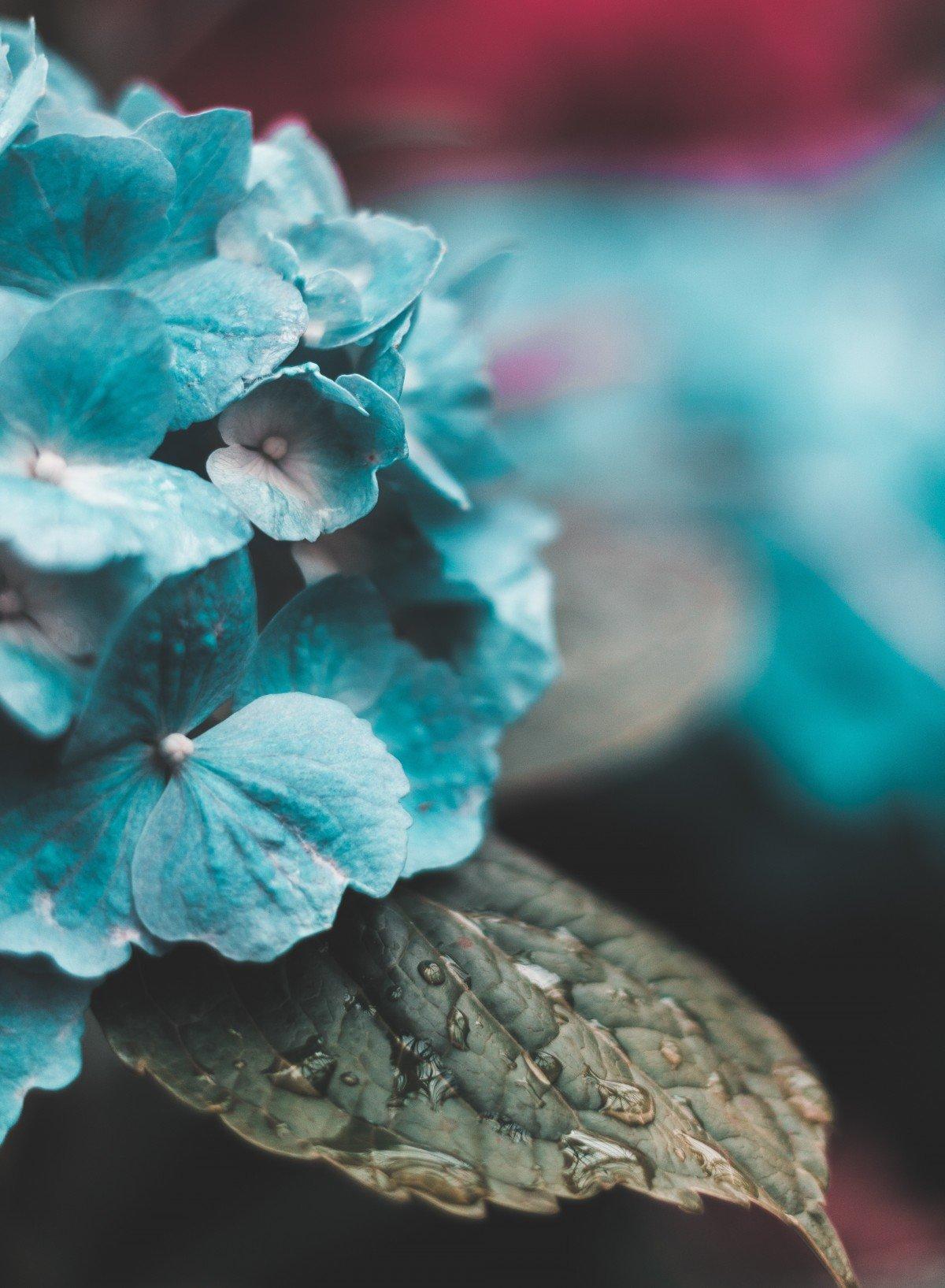 Бирюза цвет в картинках