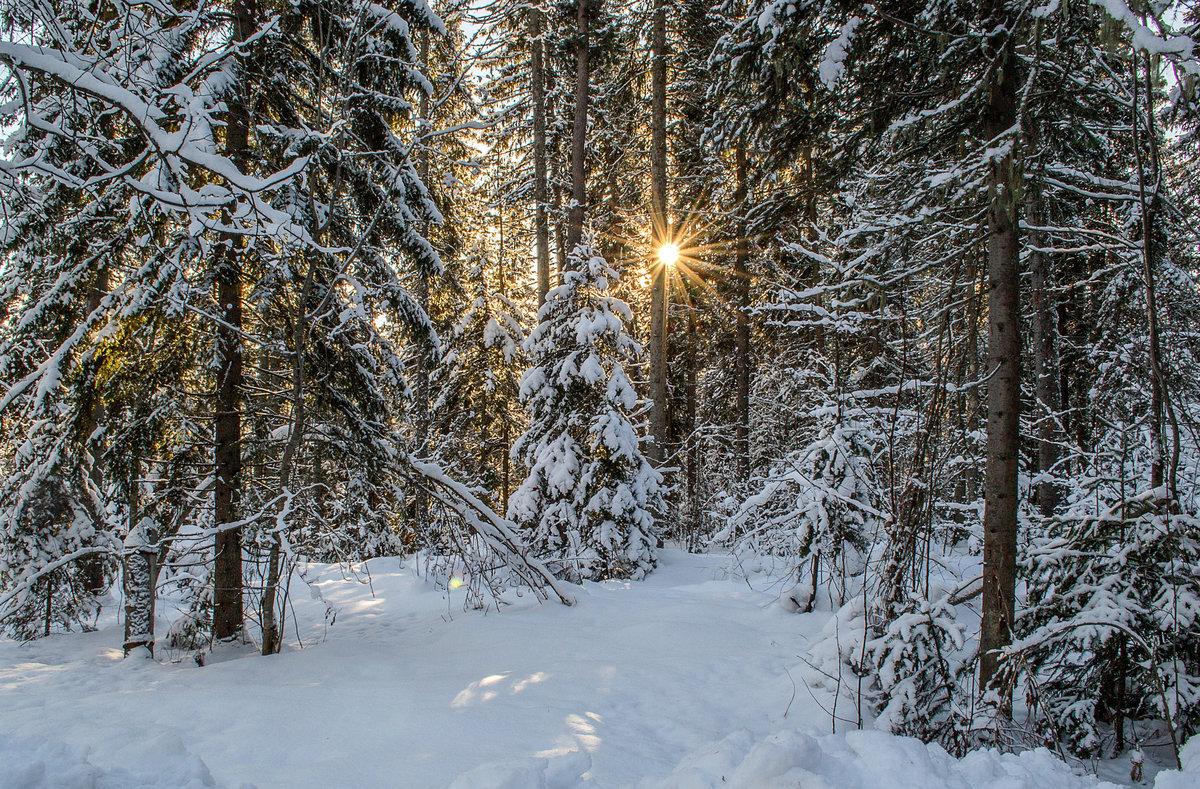 продаже путешествие в зимний лес с фотоотчетом чкалов, фото