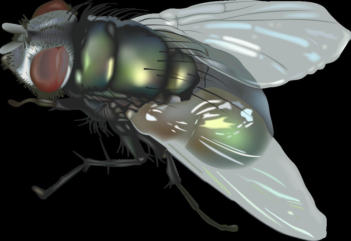 Картинка с мухой для детей, пожеланиями