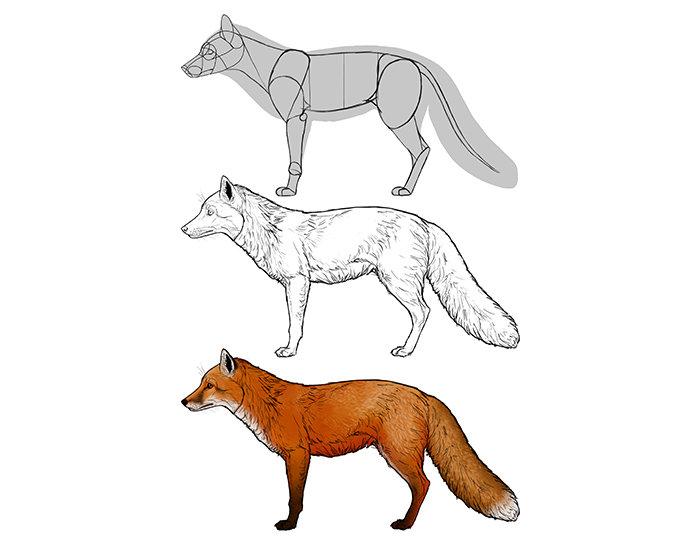 Как рисовать лису картинки