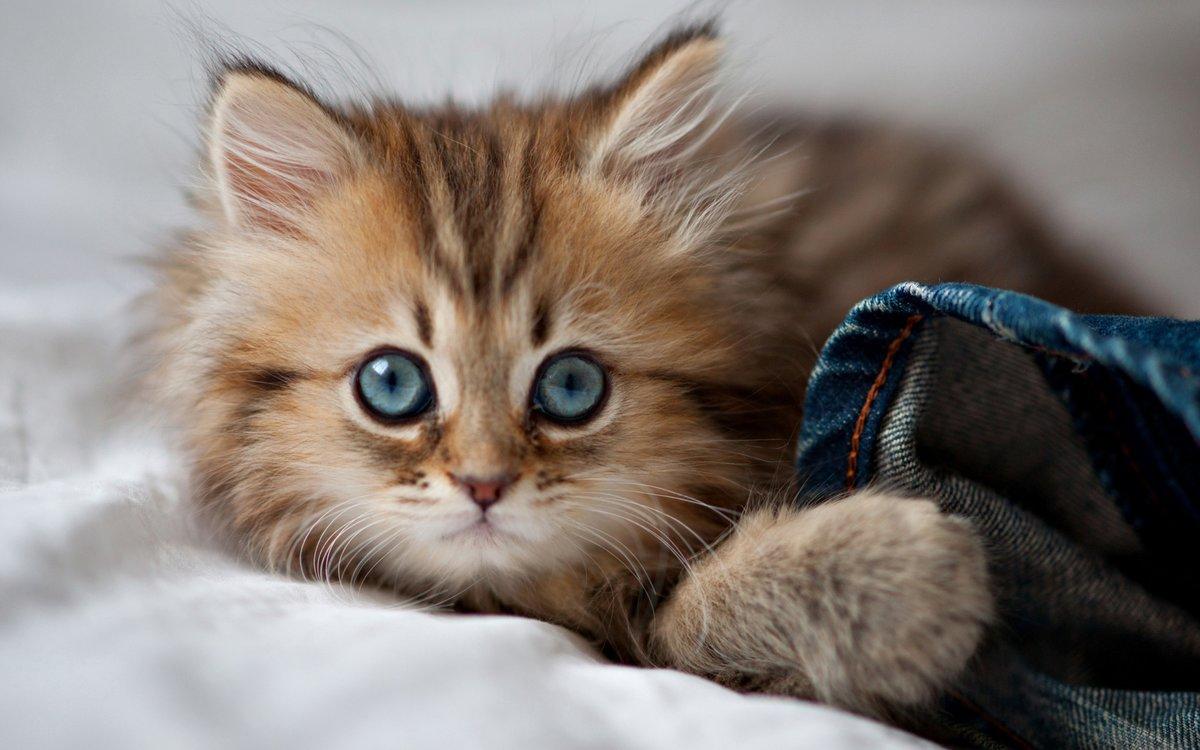 Красивые картинки с кошечками