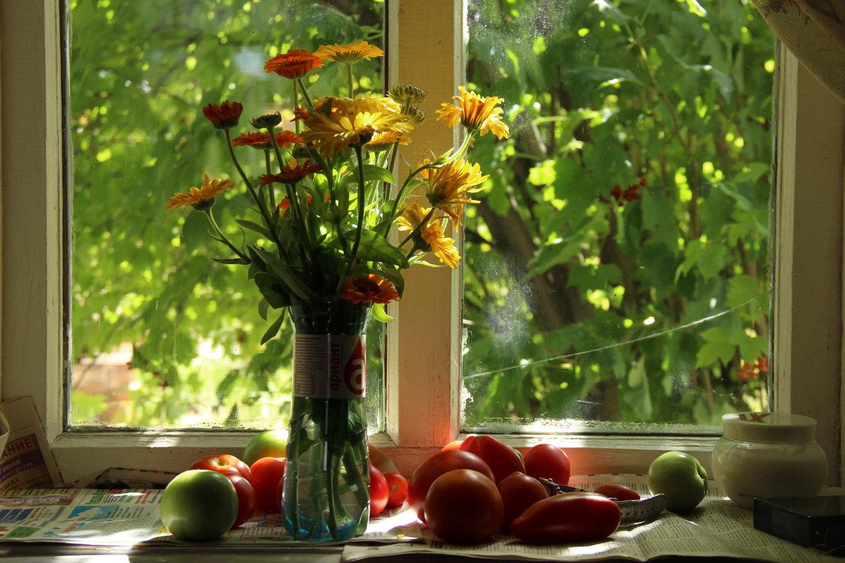 фотонатюрморты цветы на окне потолки оргстекла изготавливаются