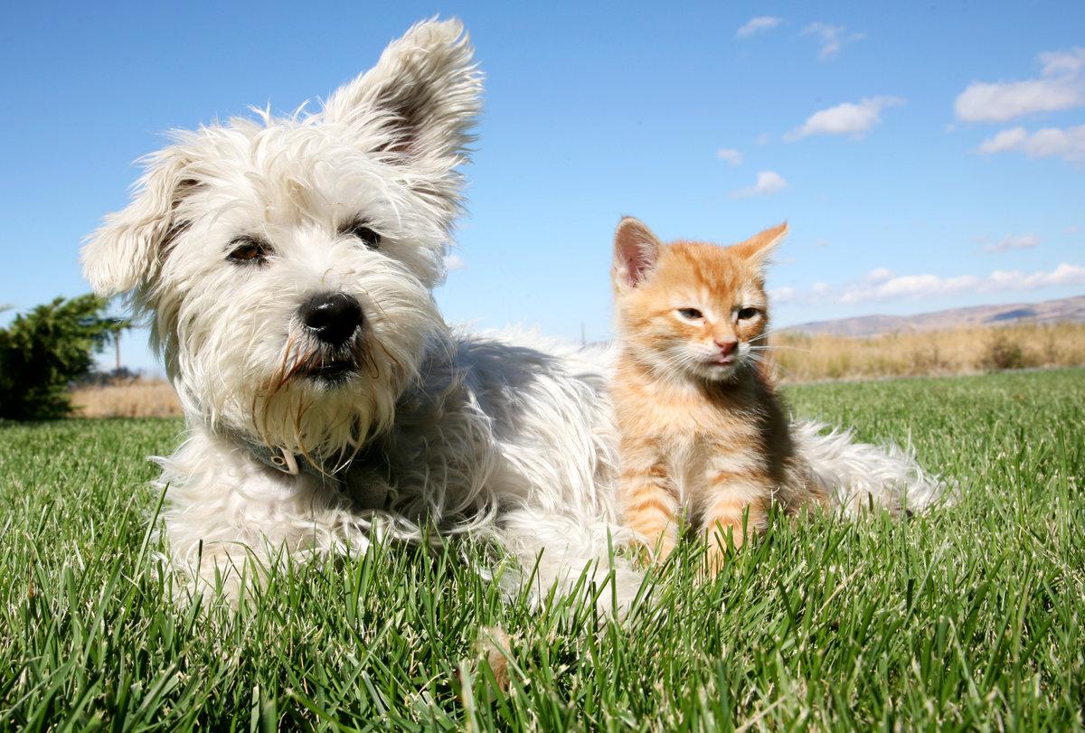 Картинки на тему собаки и кошки, днем рождения