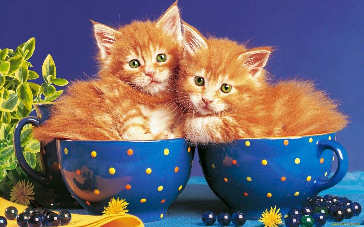 Картинки котята добрый вечер